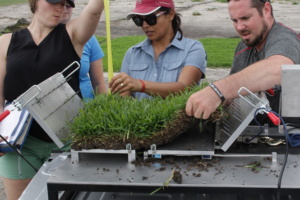 Texas A&M AgriLife Research Breeds Viable Zoysiagrass for Putting Greens